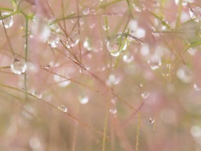 雨ならではの_a0129867_17463241.jpg