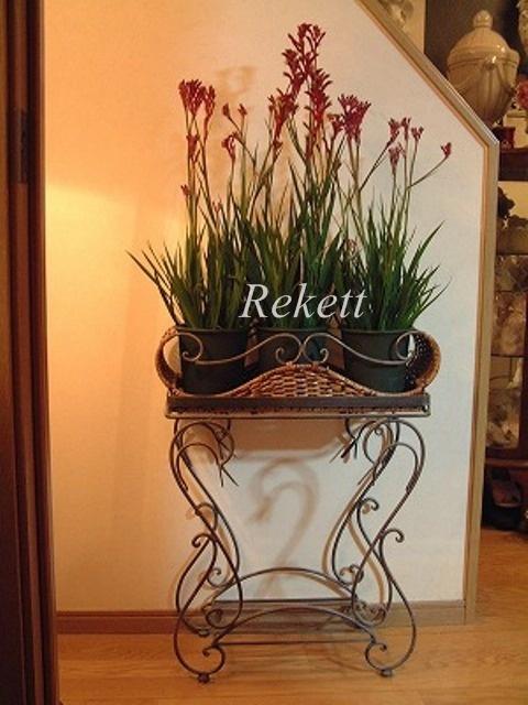 お気に入りの植物~❤_f0029571_16451822.jpg