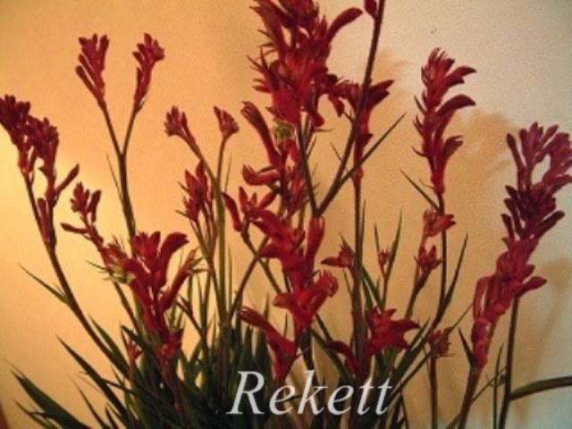お気に入りの植物~❤_f0029571_16463833.jpg