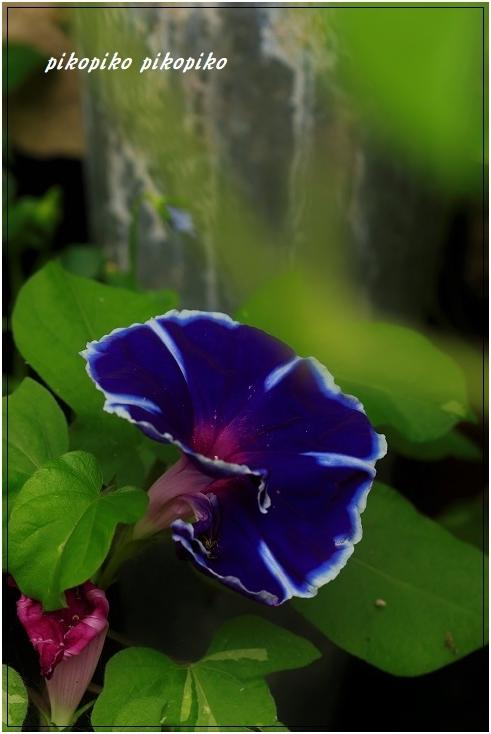 光の中の紫陽花_e0353681_14182447.jpg