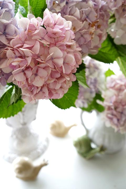 お迎えのお花 アジサイ_f0127281_18193327.jpg