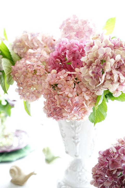 お迎えのお花 アジサイ_f0127281_18201087.jpg