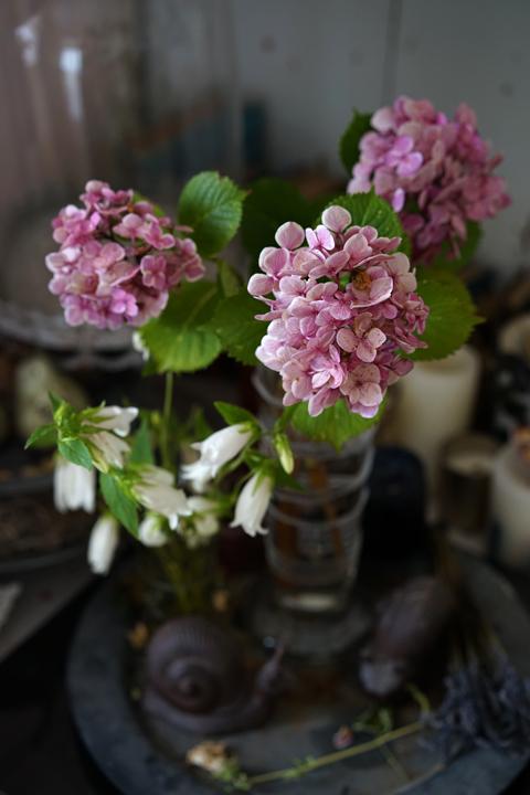 お迎えのお花 アジサイ_f0127281_18204057.jpg