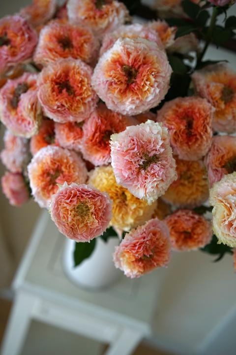 rose シャイオン フルブルーム スプレー_f0127281_18245467.jpg