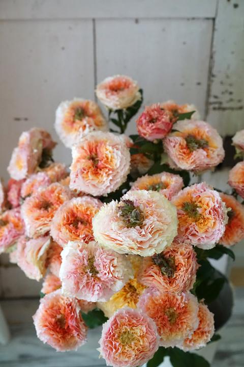 rose シャイオン フルブルーム スプレー_f0127281_18253159.jpg