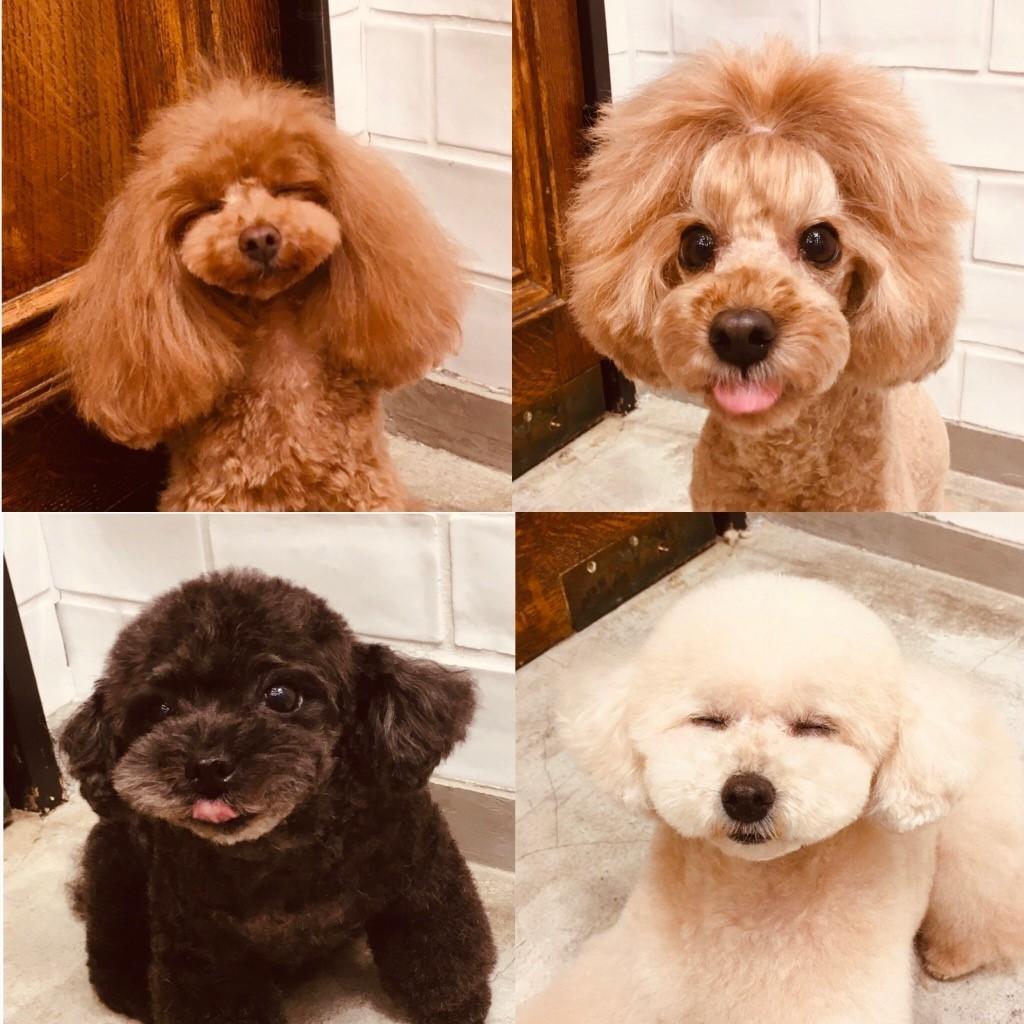 ☆ dogshopMILIEU ☆_d0060413_16254255.jpg