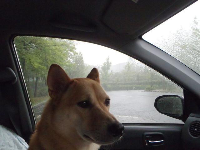 大雨の散歩_e0371017_00011155.jpg