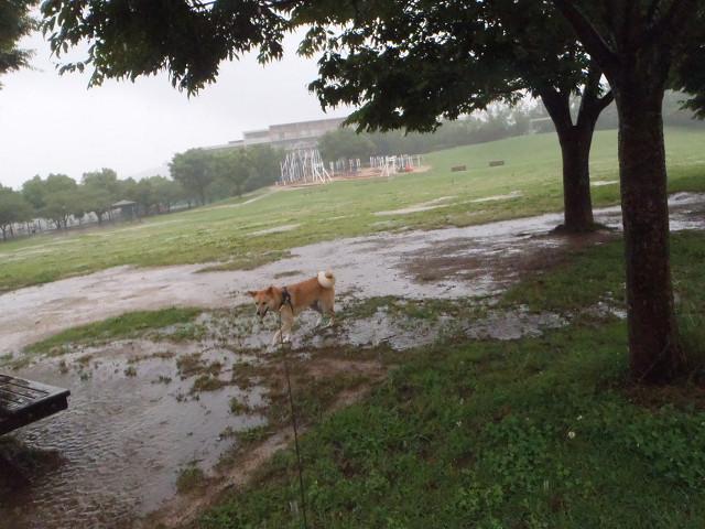大雨の散歩_e0371017_00013380.jpg
