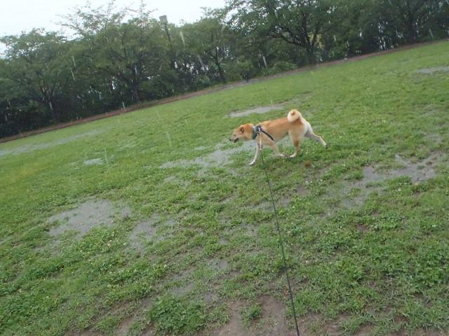 大雨の散歩_e0371017_00014178.jpg