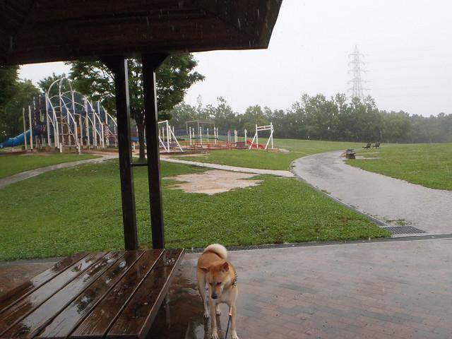 大雨の散歩_e0371017_00020234.jpg