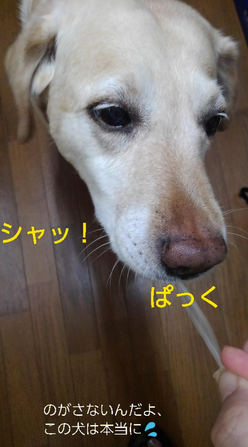 メリー、半田素麺の「コシ」を重要視する_b0339522_10015872.jpg