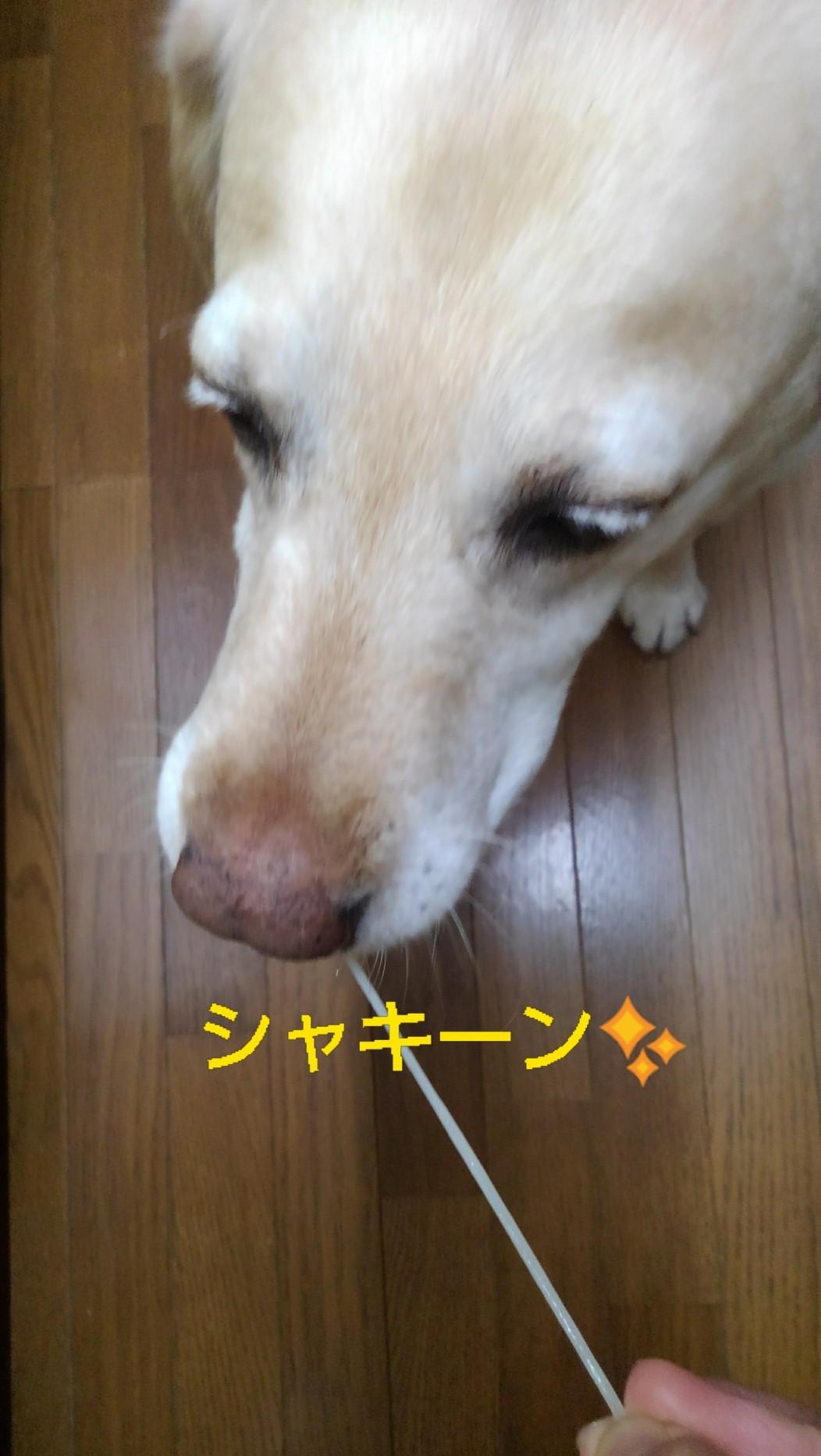メリー、半田素麺の「コシ」を重要視する_b0339522_10022351.jpg