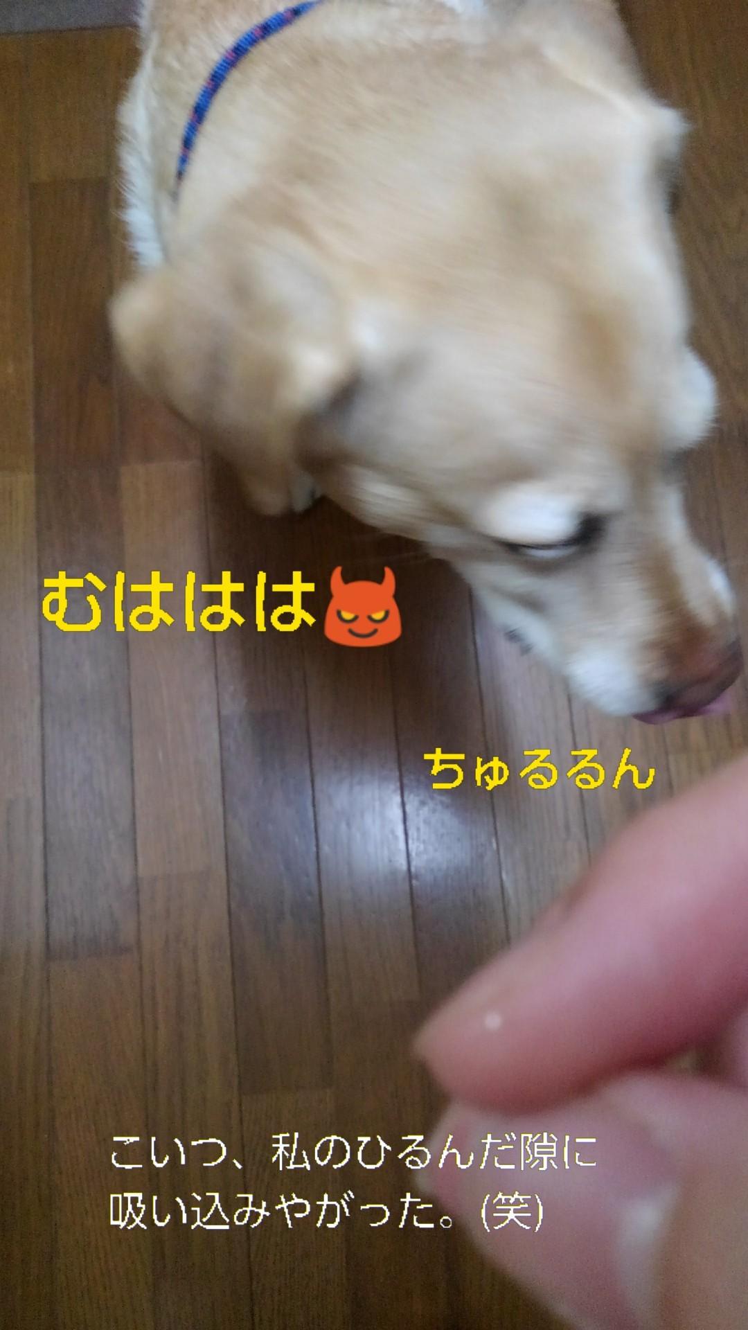 メリー、半田素麺の「コシ」を重要視する_b0339522_10025931.jpg