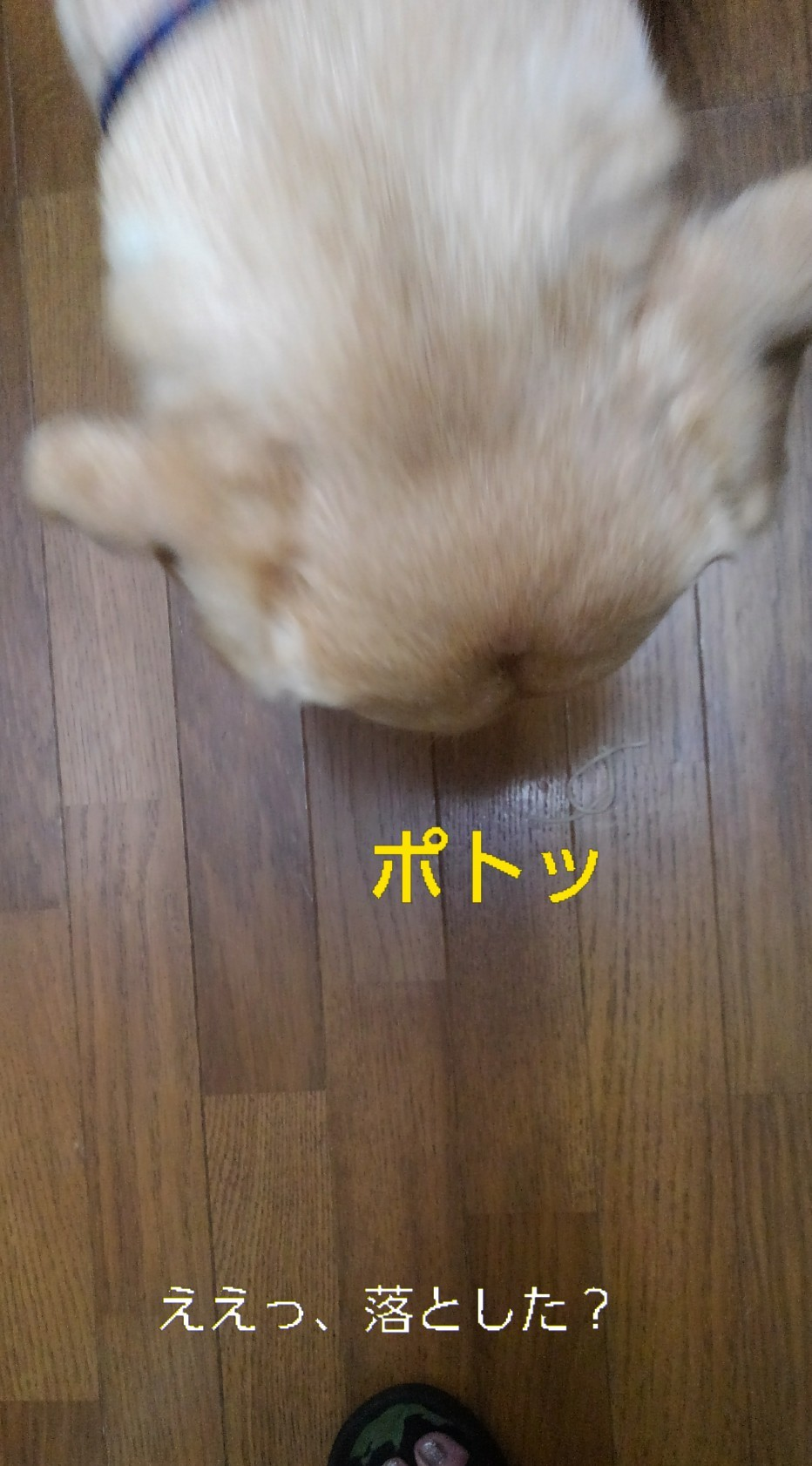 メリー、半田素麺の「コシ」を重要視する_b0339522_10034544.jpg