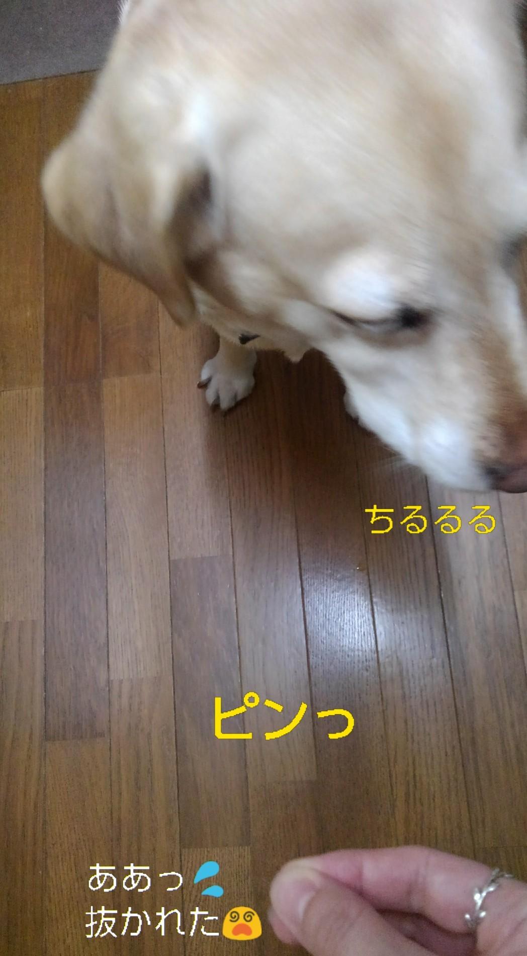 メリー、半田素麺の「コシ」を重要視する_b0339522_10043994.jpg