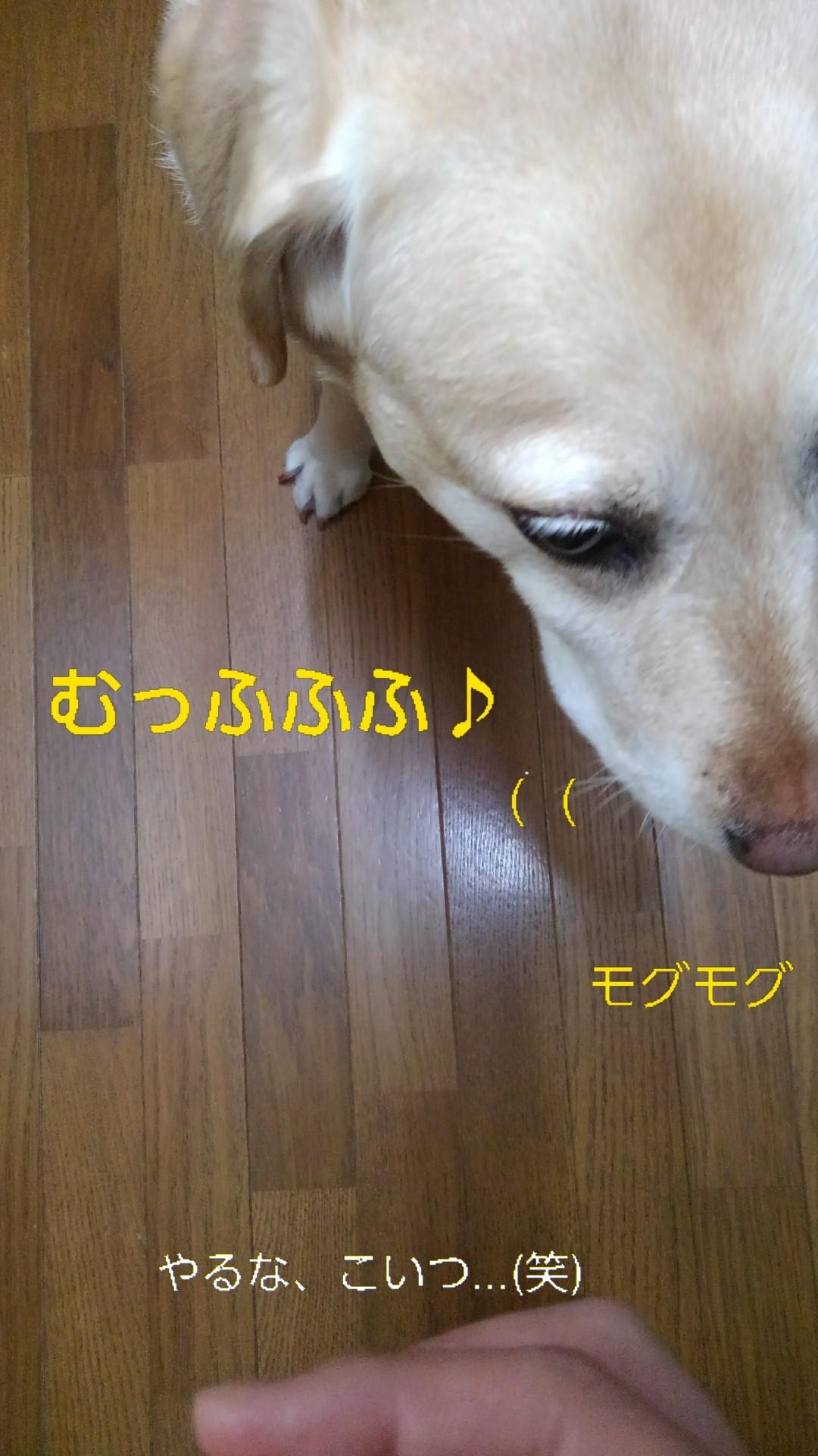 メリー、半田素麺の「コシ」を重要視する_b0339522_10045762.jpg
