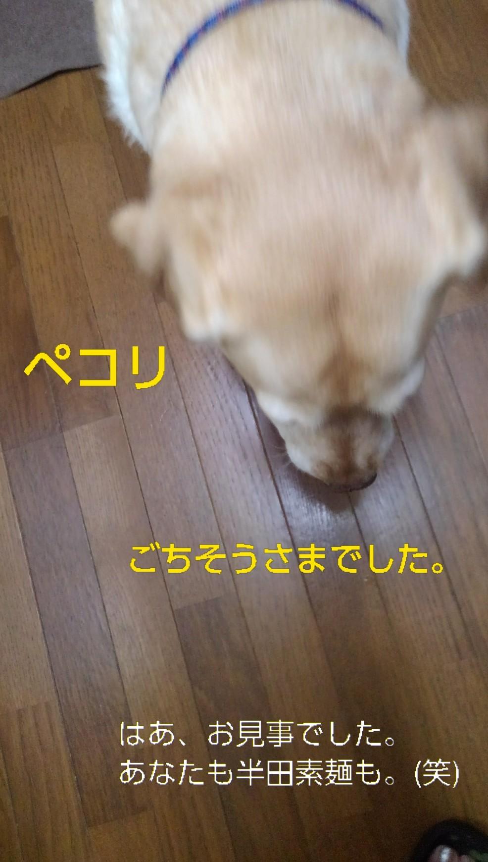 メリー、半田素麺の「コシ」を重要視する_b0339522_10054830.jpg