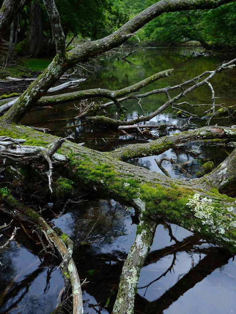 Wildeness Photo_f0050534_07263279.jpg
