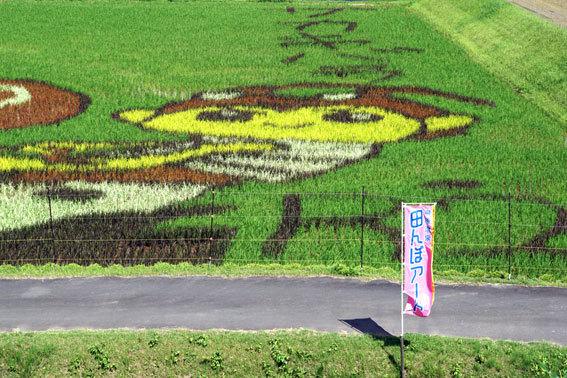 見ごろを迎えた榊原温泉の田んぼアート_b0145257_10083775.jpg