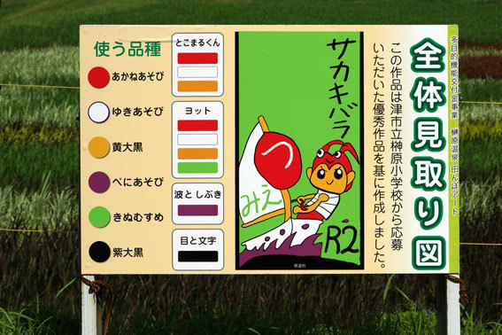 見ごろを迎えた榊原温泉の田んぼアート_b0145257_10084180.jpg