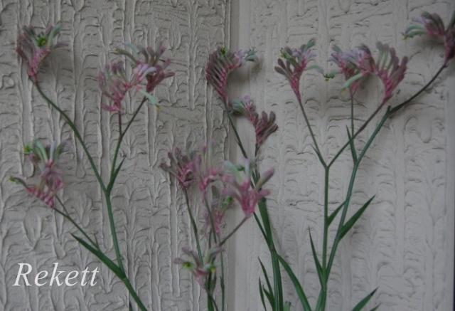 お気に入りの植物~❤_f0029571_22280181.jpg