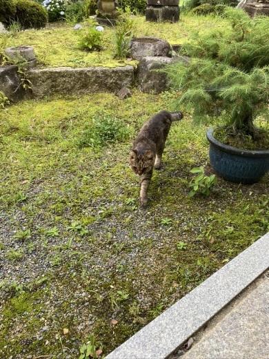 今朝のウグちゃん & 庭のヤマモモ_c0334574_19222614.jpeg