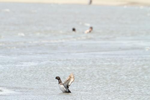 ★西なぎさの鳥類調査をしました!_e0046474_18141052.jpg