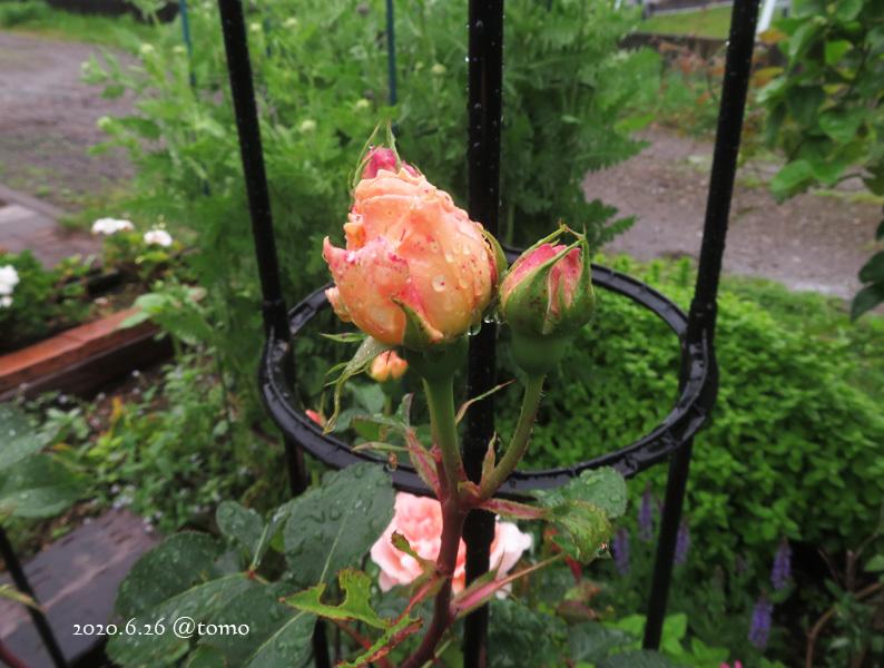 雨降りとエブリン_f0067179_13462806.jpg