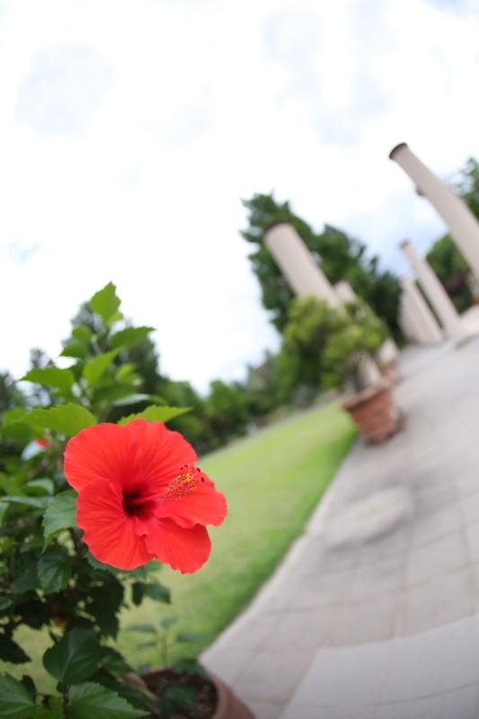 久屋大通庭園フラリエ_f0367980_21012483.jpg