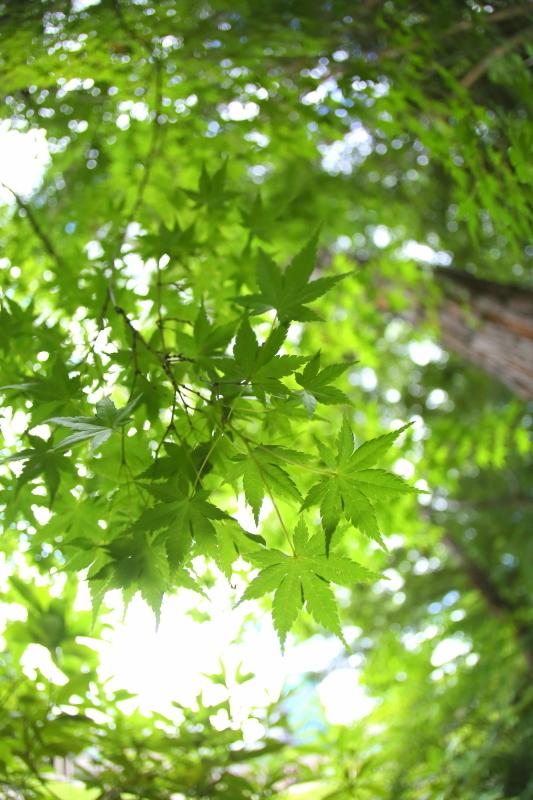 久屋大通庭園フラリエ_f0367980_21062302.jpg