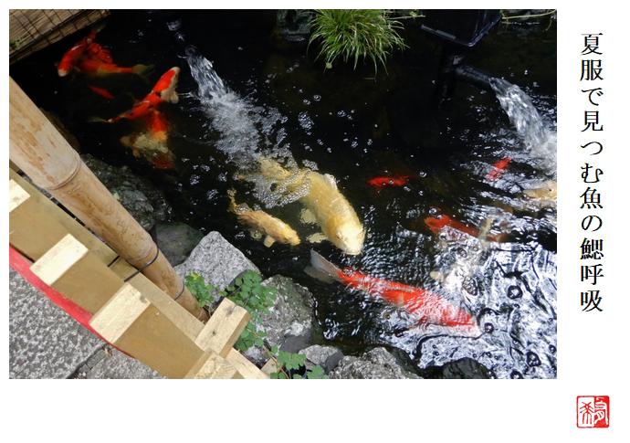 夏服で見つむ魚の鰓呼吸_a0248481_20173284.jpg