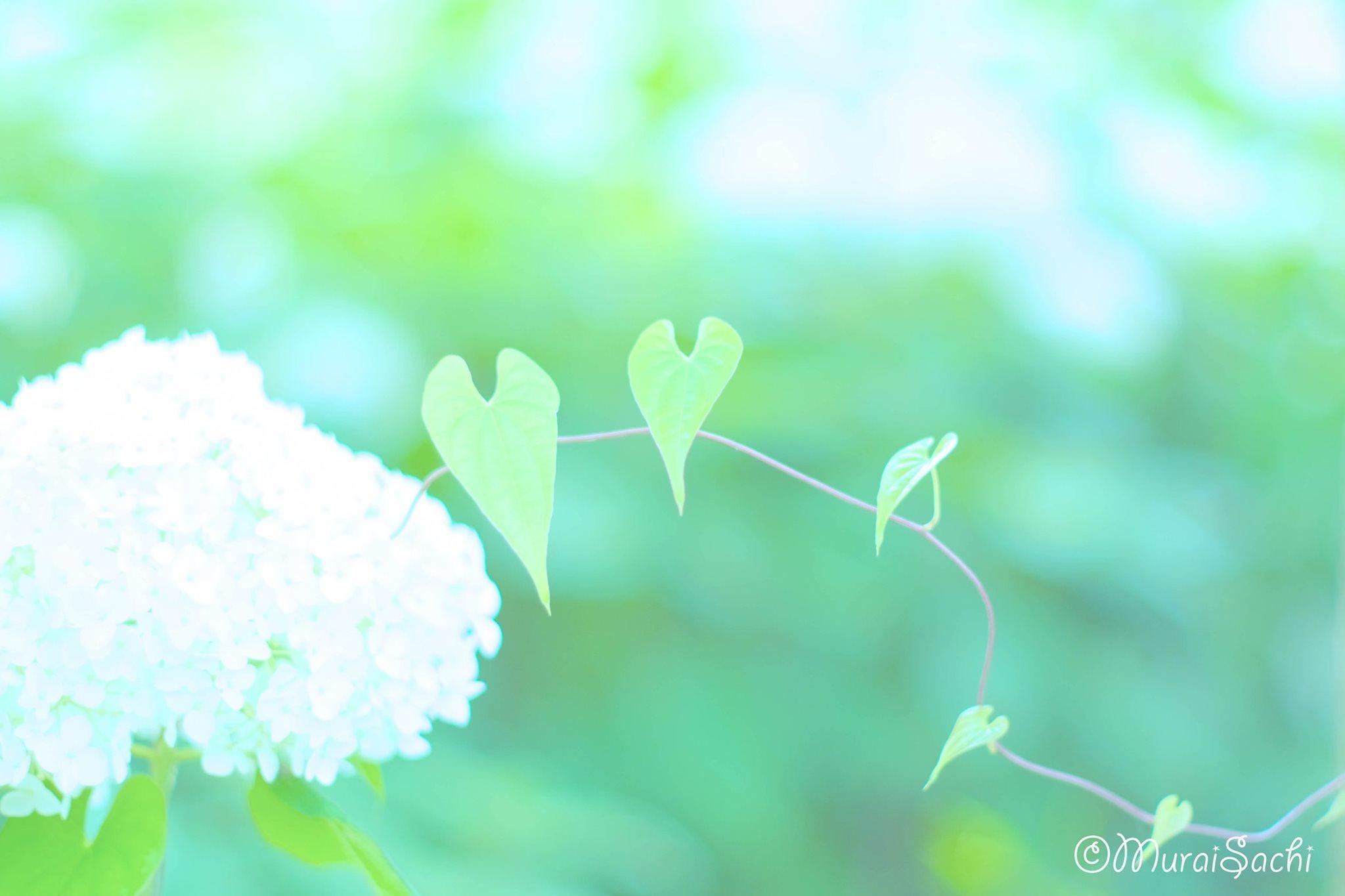 ある日のオンラインサロンの記事 紫陽花編_c0073387_06235550.jpg