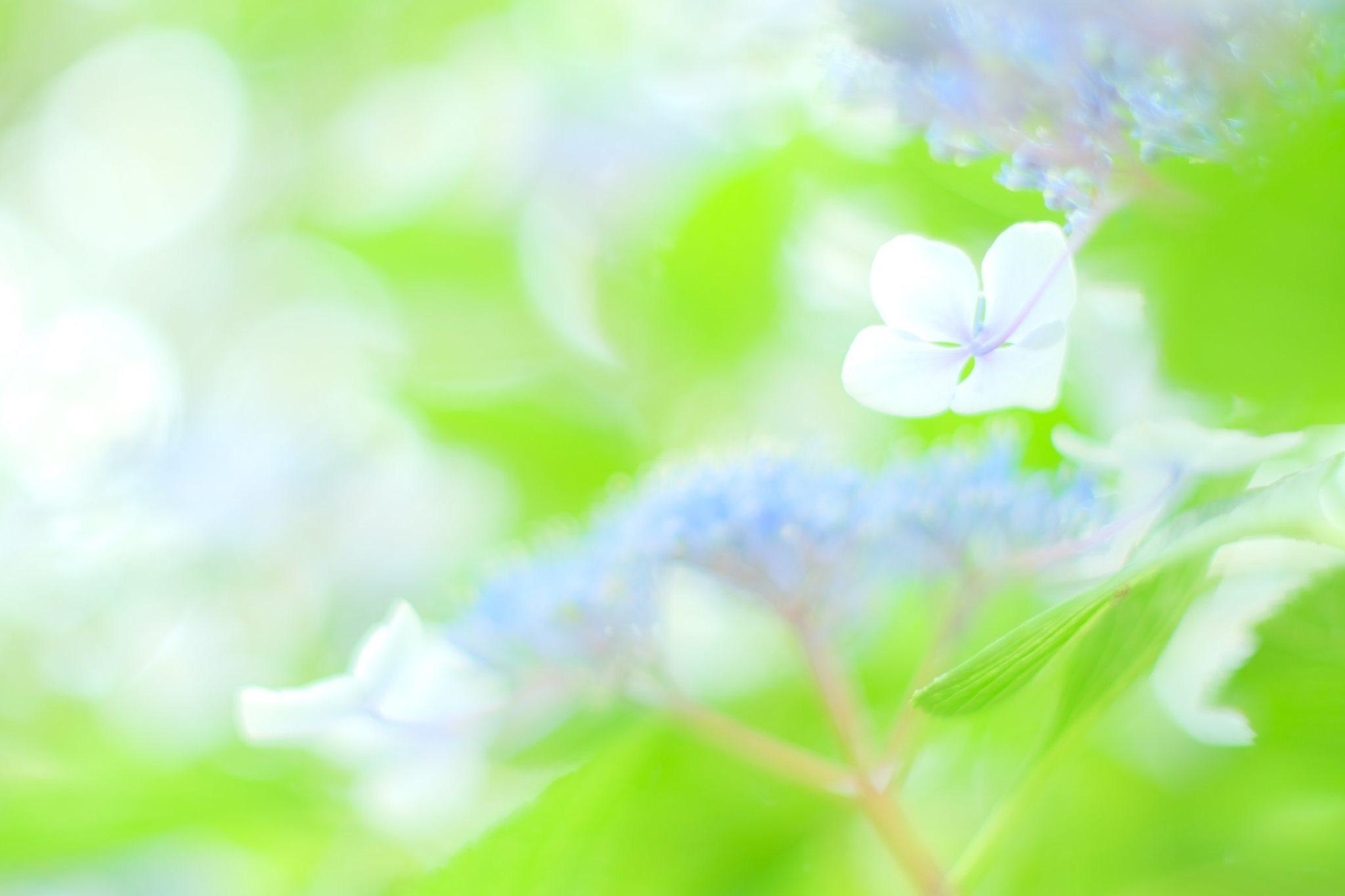 ある日のオンラインサロンの記事 紫陽花編_c0073387_06235558.jpg