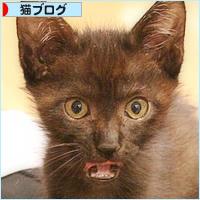 子猫の遊び場_a0389088_05455424.jpg