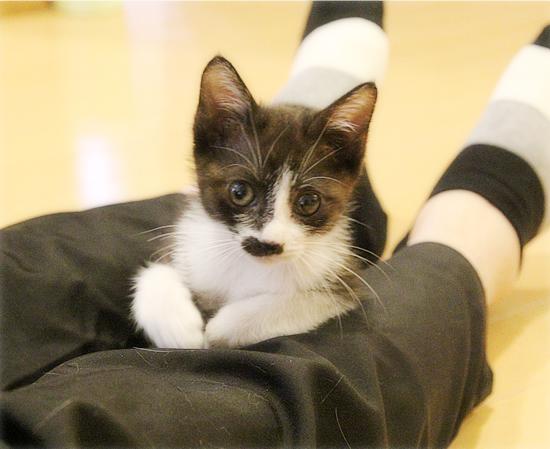 子猫の遊び場_a0389088_05455440.jpg