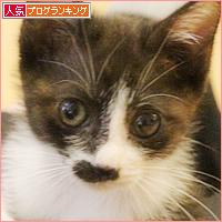 子猫の遊び場_a0389088_05455543.jpg