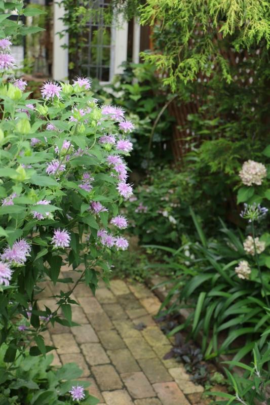 初夏のお花が次々と~_a0123003_22285435.jpg