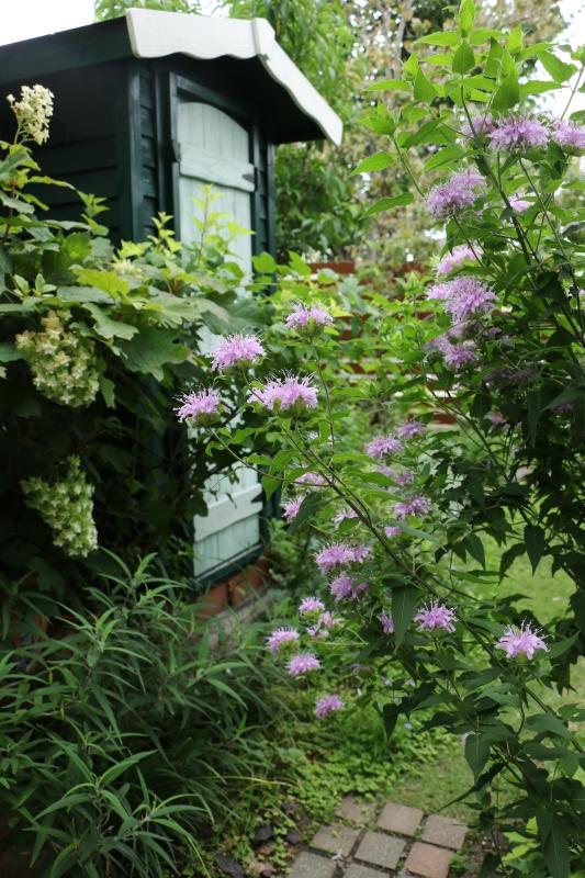 初夏のお花が次々と~_a0123003_22294795.jpg