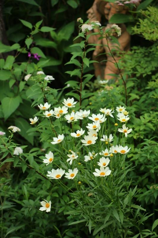初夏のお花が次々と~_a0123003_22442803.jpg