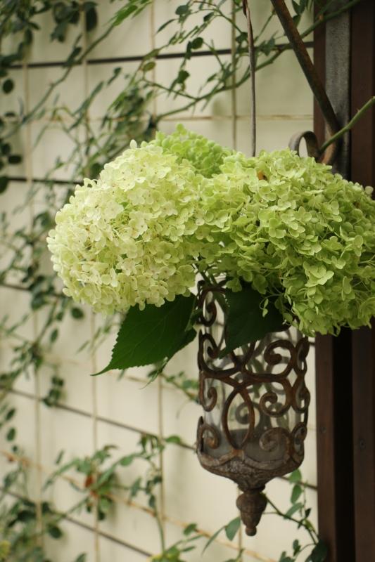 初夏のお花が次々と~_a0123003_22590001.jpg