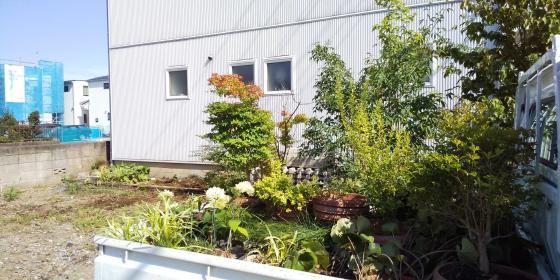 窓から見える庭を | _d0080906_21361951.jpg