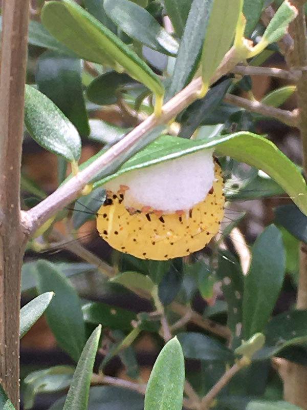 オリーブの木にいる虫_b0025008_18210217.jpg