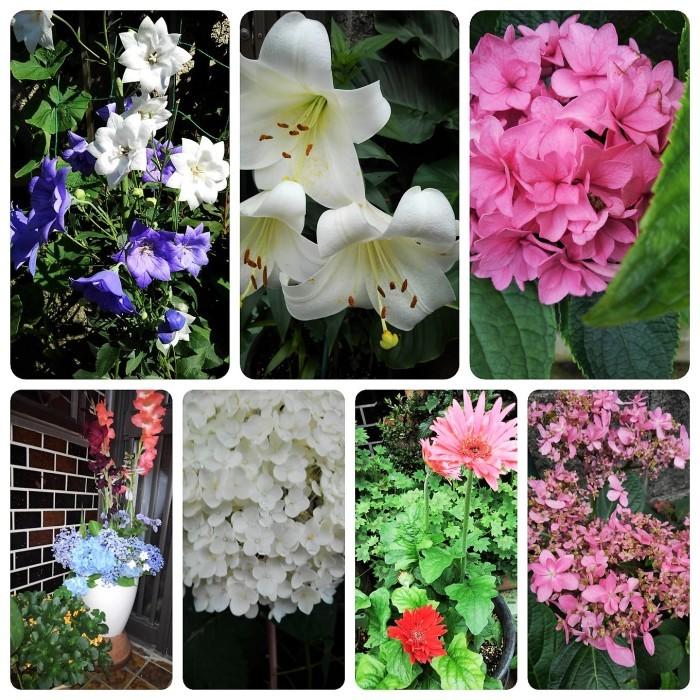 ■園芸【我が家のプランター栽培の花達色々です♪】畑もお花だらけですが^^_b0033423_23070617.jpg