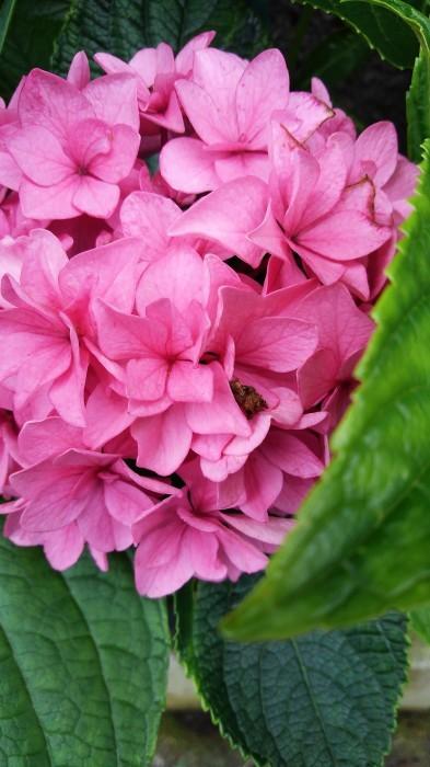 ■園芸【我が家のプランター栽培の花達色々です♪】畑もお花だらけですが^^_b0033423_23195057.jpg
