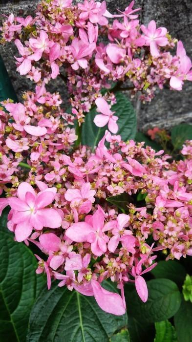 ■園芸【我が家のプランター栽培の花達色々です♪】畑もお花だらけですが^^_b0033423_23232115.jpg