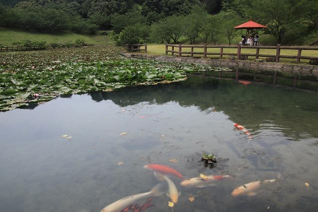 寺谷公園スイレン池散歩(撮影:6月20日)_e0321325_13492401.jpg
