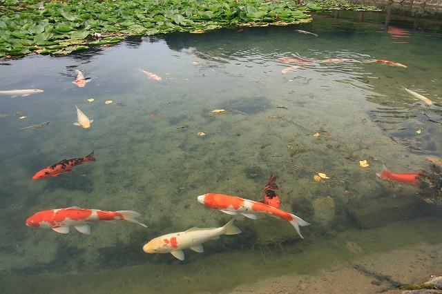 寺谷公園スイレン池散歩(撮影:6月20日)_e0321325_13520664.jpg