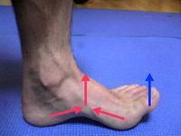 膝窩と腰痛の関連について_c0035230_22223122.jpg