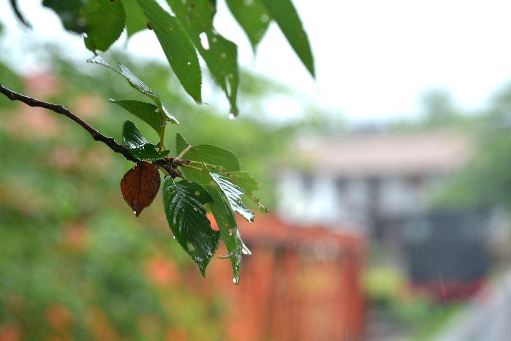 4丁目の雨模様_e0373930_19170962.jpg