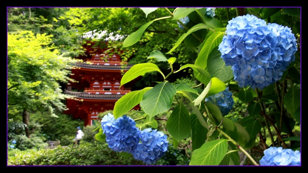 京都南山城の国_a0355356_10185924.jpg